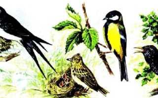 Поведение зимующих птиц при приблежении весны