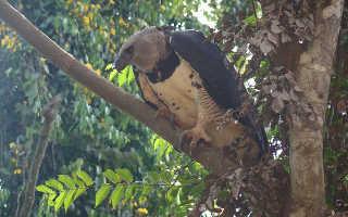 Орел — 85 фото особо крупной хищной птицы семейства ястребиных