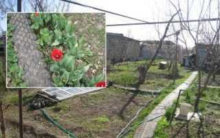 Дорожка садовая из покрышек своими руками: фото, видео