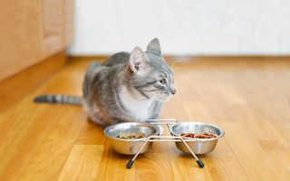 Корм для собак и кошек премиум класса — влажные и сухие корма для животных на