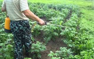 Гербициды для картофеля от сорняков: обработка после всходов
