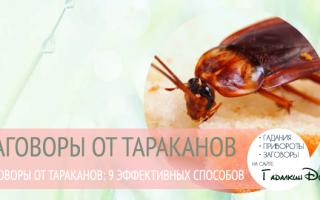 Заговор от тараканов: как избавиться, читать в любое время