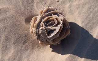 Камень роза пустыни (Тунис): свойства минерала и как выглядит