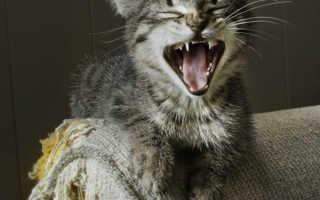 Как отучить котенка кусаться и царапаться:ночью и днем, практические советы, видео
