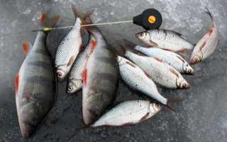 Зимняя рыбалка на безмотылку: секреты и техника ловли