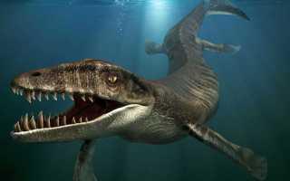 Топ-10: самые крупные и свирепые морские динозавры в истории