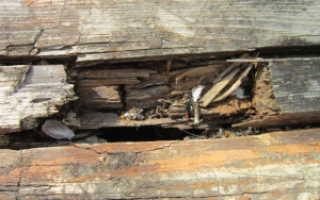 Чем обработать древесину от гниения и плесени