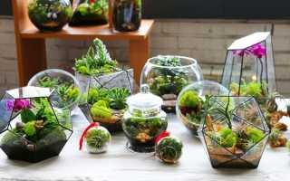Флорариум с суккулентами: как посадить своими руками в аквариуме, стекле, вазе