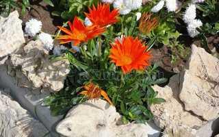 Растения для альпийской горки и рокария: фото и названия