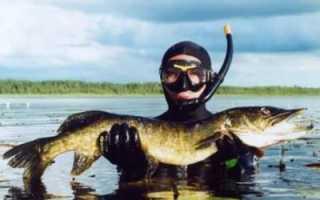 Подводная охота на щуку