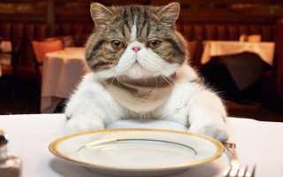 Чем кормить кота в домашних условиях