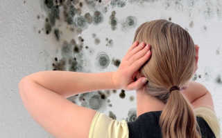 Как вывести грибок на стенах в квартире, эффективные средства уничтожения