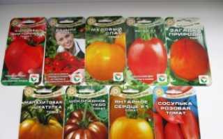 Секреты агрономов как вырастить томаты из семян в домашних условиях на рассаду, правила ухода