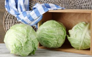 Как хранить капусту в погребе зимой: простые способы и тонкости