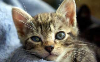 Кератит у кошек: причины, симптомы, лечение