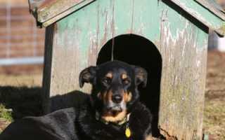 Будка для собак своими руками (55 фото): необычные домики, рубленный из дерева, свой навес, как