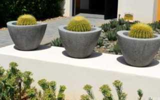 Удобрение для кактусов — секрет подкормки и полива в домашних условиях