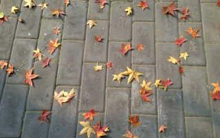 Почему желтеют и опадают листья осенью