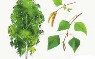 Листья деревьев: картинки для детей