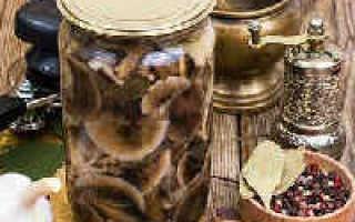 Маринованные сыроежки на зиму в банках: рецепты приготовления