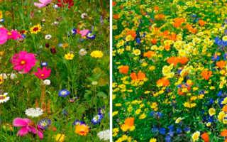 Мавританский газон плюсы и минусы, отзывы садоводов, состав, уход