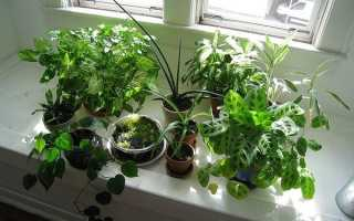 Комнатные цветы из семян: как вырастить в домашних условиях