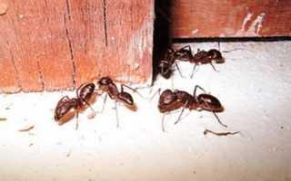 3 вида средств для борьбы с муравьями в бане