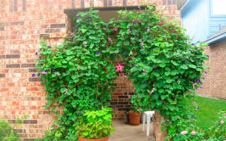 Вьющиеся растения для сада: 65 роскошных фото