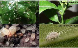 В земле комнатных растений в горшке завелись белые маленькие насекомые в ванной