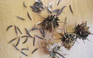 Космея: фото цветов, выращивание из семян, когда сажать, посадка и уход